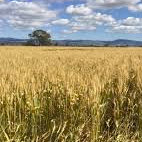 Agriculture-Hay-industry